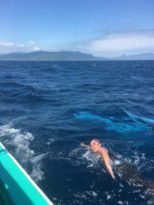 津軽海峡横断泳の様子です。