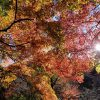 鎌倉アルプス1周ハイキングに行ってきました〜