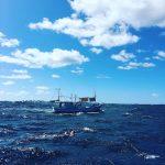 プールで30kmに挑戦! 第1回『津軽海峡横断シミュレーションスイム』【12/30(日)】