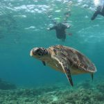 2019ケラマ諸島ホエールウォッチング&離島スイムピクニック レポート