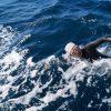 アシカ島〜沖ノ島経由〜城ヶ島(約18km)リレー形式で泳ごう!メンバー募集【11/21(土)】